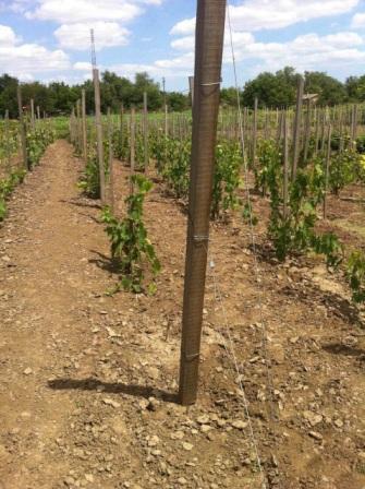 трос для виноградника, строп с одной петлей, трос для оттяжки, однопетлевой строп, трос для шпалеры, трос для виноградника купить