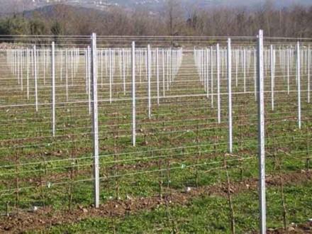 столбы для виноградников, железобетонные столбы для виноградника, металлические столбы, дубовые столбы, шпалерные столбы для виноградника, столбы для виноградника