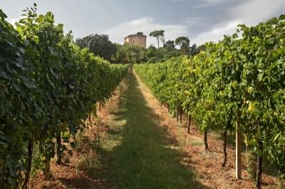 800px-Виноградник Colli di Faenza